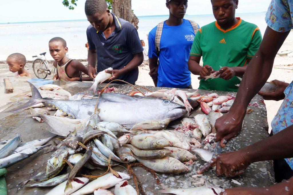25-fische-ausnehmen